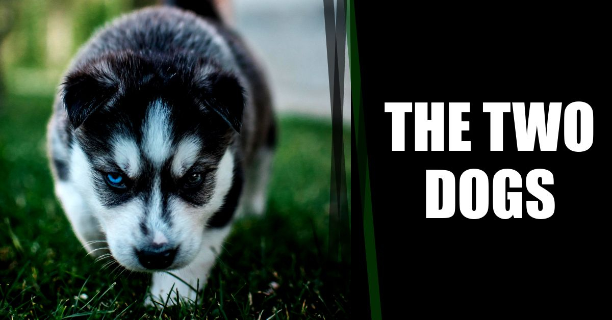 Read more about the article The Two Dogs