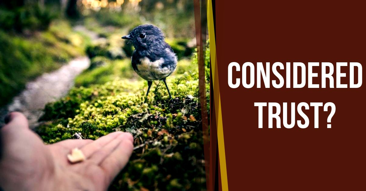 Read more about the article Considered Trust